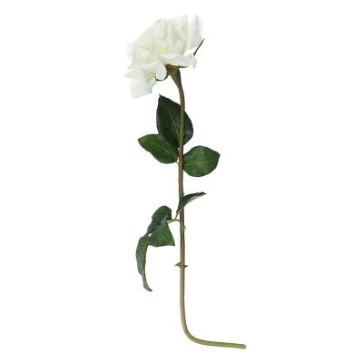 Rosa Dutches Blanca 5''