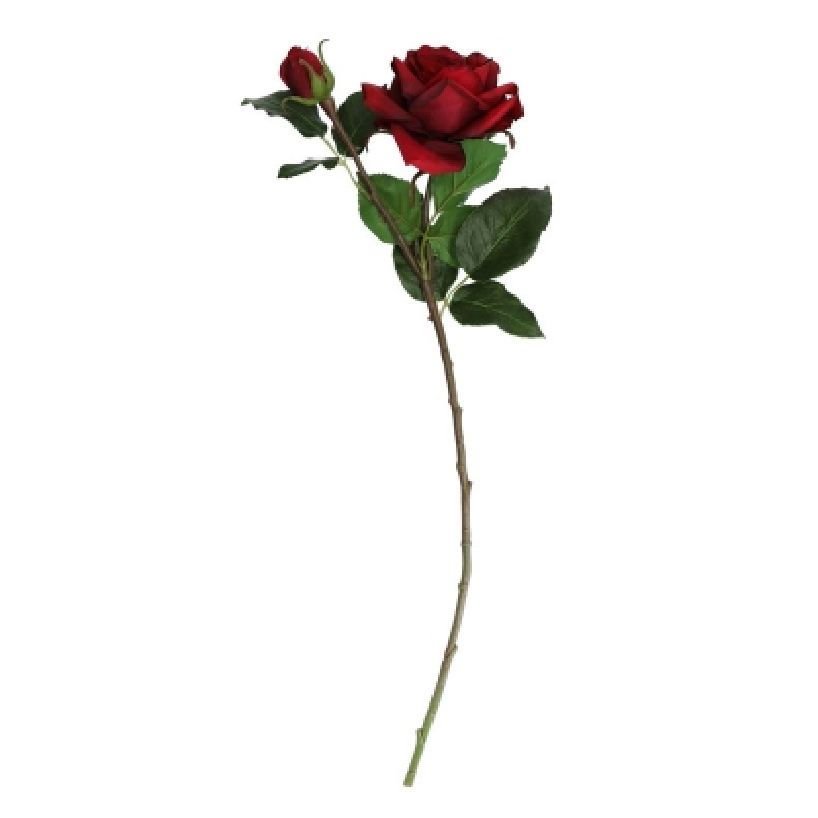 Rosa Roja 20''