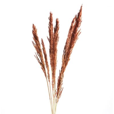 "Rama Pampas Grass 47"""