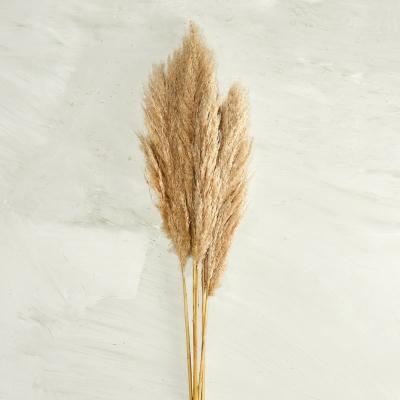 Rama Pampas Grass Juego De 5