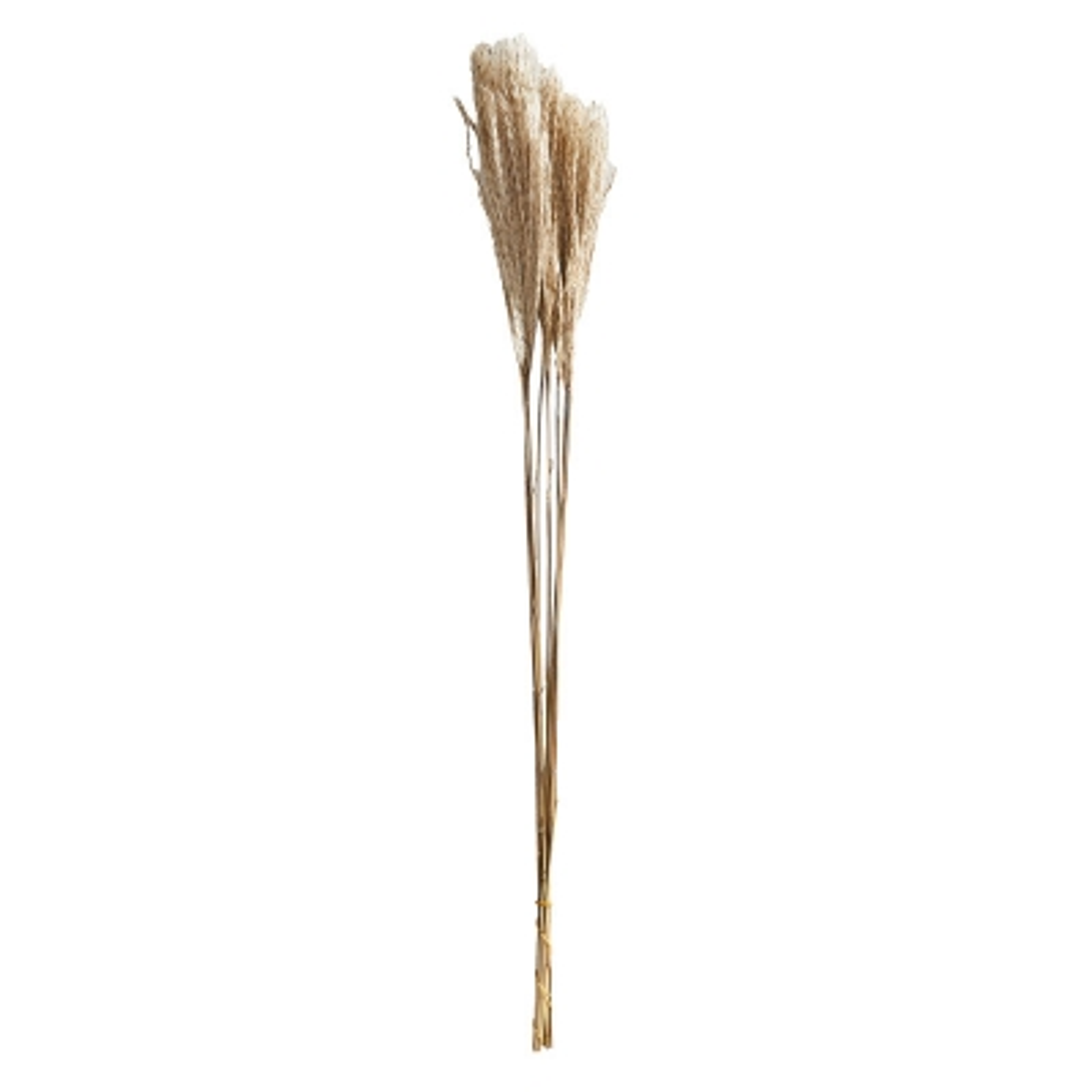 Ramo Silver Grass 10 Piezas